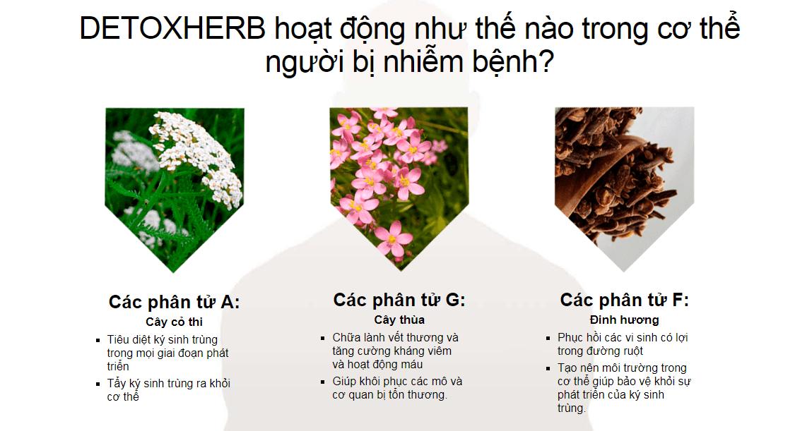rat-nguy-hiem-detoxherb-co-tot-khong-mua-o-dau-gia-bao-nhieu-6